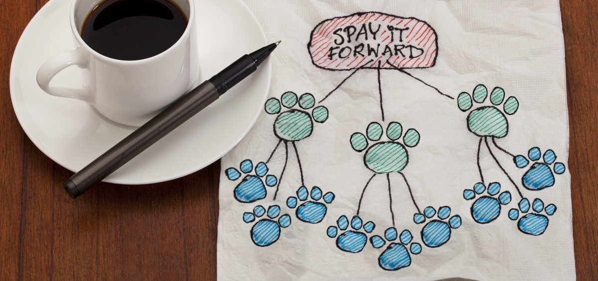 Spay It Forward!